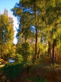 Creek in the trees Royalty Free Stock Photography