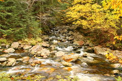 Creek with trees in fall colors Royalty Free Stock Image