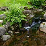 Creek in tropical forest Stock Image