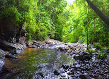 Creek in tropical forest Royalty Free Stock Photography