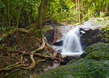 Creek in tropical forest Stock Images