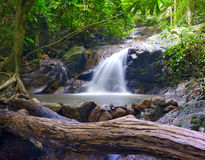 Creek in tropical forest Royalty Free Stock Images