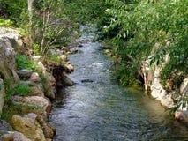 Creek under osier trees Stock Image
