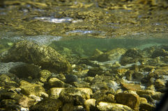 Creek Underwater Royalty Free Stock Photos
