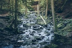 Creek in untouched forest. Wild creek in untouched forest Royalty Free Stock Photography