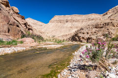 The creek in valley Wadi Hasa in Jordan Stock Image