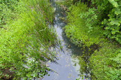 Creek vegetation Stock Image