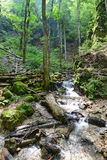 Creek and vegetation between after the sapte scari canyon from Brasov. Stock Image