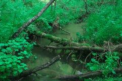 Creek water greens tree trunks photo Royalty Free Stock Photos