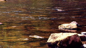Creek Water stock footage