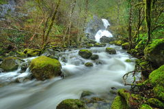 Creek and waterfall Royalty Free Stock Images