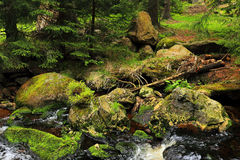 Creek in the Wilderness from the Mountains Sumava in southern Czech Stock Image