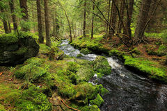 Creek in the Wilderness from the Mountains Sumava in southern Czech Royalty Free Stock Image