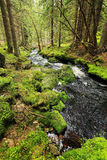 Creek in the Wilderness from the Mountains Sumava in southern Czech Stock Images
