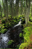 Creek in the Wilderness from the Mountains Sumava in southern Czech Royalty Free Stock Images