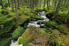 Creek in the Wilderness from the Mountains Sumava in southern Czech Stock Photo