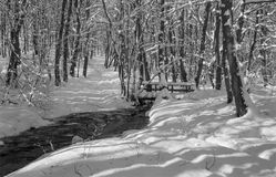 Creek in winter forest in Little Carpathian hills Stock Photo