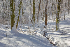 Creek in winter forest in Little Carpathian hills Royalty Free Stock Photos