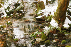 Creek in winter forest. Stones covered with moss in the forest Stock Photos