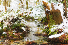 Creek in winter forest. A tree stump in the winter forest Royalty Free Stock Images
