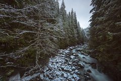 Creek Winter Snow. Winter in Snoqualmie National Forest, North Cascades, Washington State, USA Royalty Free Stock Images
