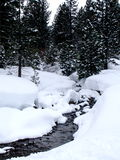 Creek in Wintry forest. Scenic view of small creek in snow covered wintry forest Royalty Free Stock Photos