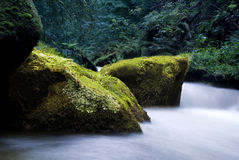 Creek in woods Royalty Free Stock Photo