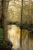Creek in woods. Small creek or stream through woods at springtime Stock Photo