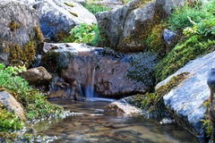Creek in the woods. Cascade falls over rocks Royalty Free Stock Images