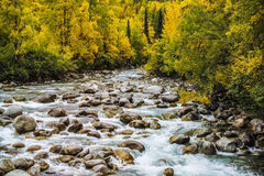 Creek and woods at fall Royalty Free Stock Image