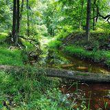Creek in the Woods with fallen tree bridge. Wild, nature, natural, creek, river, brook, sunny, green, brown, bridge, travel, explore, hike, forest, grass Royalty Free Stock Image