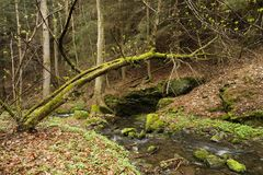 Creek in the woods Stock Image