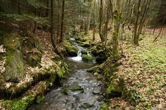 Creek in the woods Stock Photography