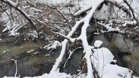 Creek in the woods nature landscape winter flowing water, small river in snow. Creek in woods nature landscape winter flowing water, small river in snow stock footage