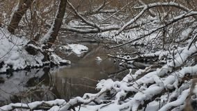 Creek in the woods nature landscape winter flowing water, small river in the snow. Creek in the woods nature landscape winter flowing water, small river in snow stock video footage