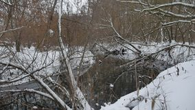 Creek in the woods nature winter flowing landscape water, small river in the snow. Creek in the woods nature winter flowing landscape water, small river in snow stock video footage