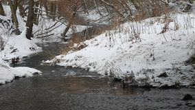 Creek in the woods nature winter flowing water, small river in the snow landscape. Creek in woods nature winter flowing water, small river in the snow landscape stock video footage