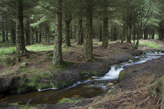 Creek in the woods. A small forest stream at Dalsnuten, Norway Stock Photography