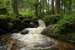 Creek in the woods. Small wild river. Creek in the woods. Small wild brook jumping over rocks Royalty Free Stock Images