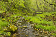 Creek In Woods Stock Photography