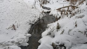 Creek in the woods in winter flowing nature water, small river in the snow landscape. Creek in the woods in winter flowing nature water, small river in snow stock video