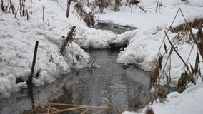 Creek in the woods in winter flowing water, nature small river in the snow landscape. Creek in the woods winter flowing water, nature small river in the snow stock footage