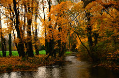 Creek and yellow forest Royalty Free Stock Photo