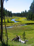 Creek in Yellowstone. Curvy creek flowing amongst lush green grass and pine trees on a sunny day Stock Image