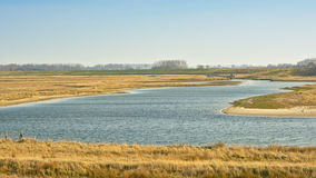 Creek at the Zwin, nature reserve next to the Belgian coast Royalty Free Stock Photos
