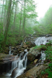 Creeks Below Amicalola Falls. Creeks below Amicalola water fall surrounded by high and green trees it was a foggy day Royalty Free Stock Image