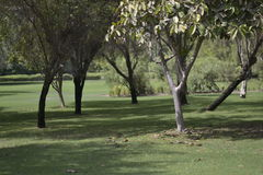 Creekside à Dubaï Images libres de droits