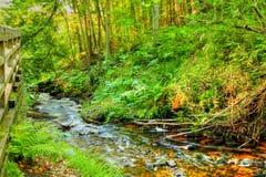 Creekside Стоковые Изображения