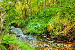 Creekside Stock Images