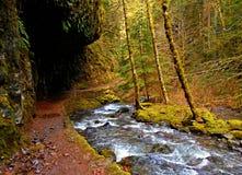 Creekside Hike. Larch Mountain hiking trail along Multnomah Creek - Columbia Gorge - OR royalty free stock photo
